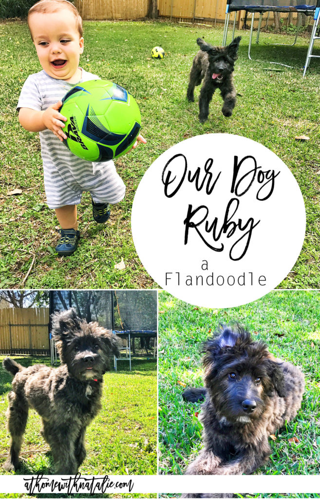 our dog ruby the flandoodle-athomewithnatalie
